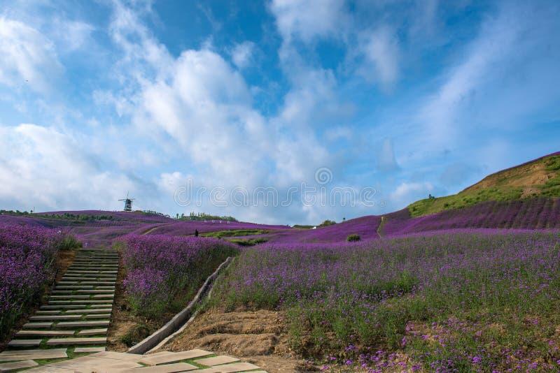 Lavendel-Feld-Park stockbilder