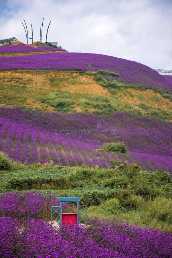 Lavendel-Feld-Park lizenzfreie stockfotos