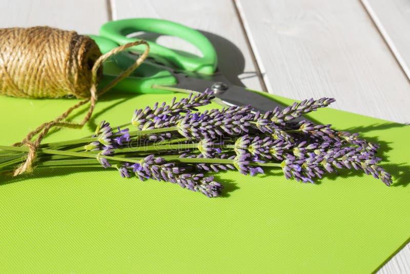 Lavendel i en grupp med trädgårdrad och sax på ett grönt mattt royaltyfria foton