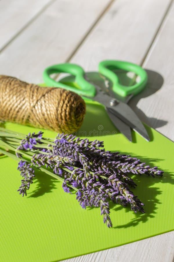 Lavendel i en grupp med trädgårdrad och sax på ett grönt mattt arkivfoto