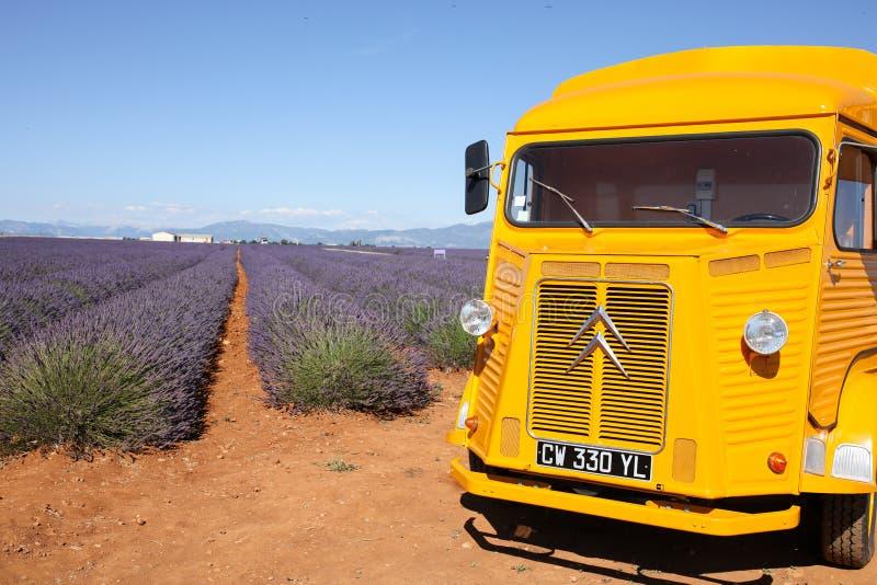 Lavendel i Provence royaltyfria bilder