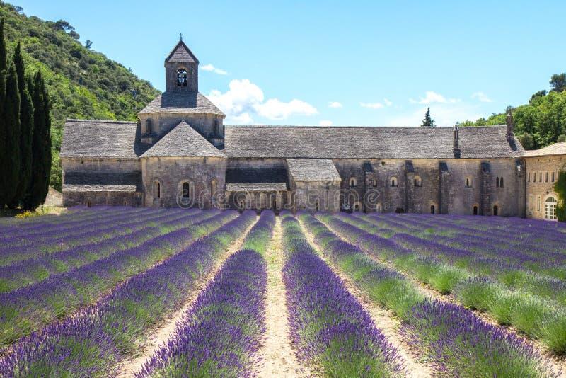 Lavendel i Provence Frankrike royaltyfria foton