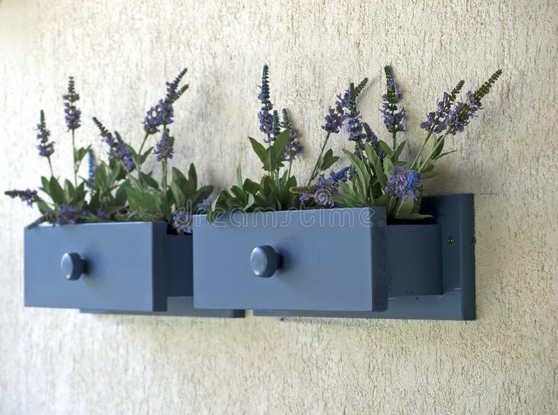 Lavendel im Fach lizenzfreie stockfotografie