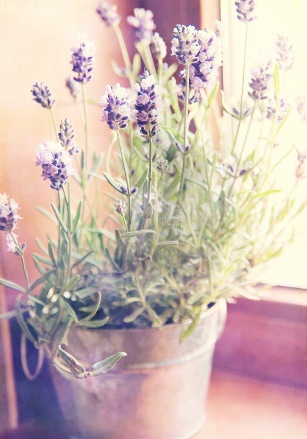 Lavendel im kleinen metallischen Eimer auf dem windowstoolender lizenzfreie stockfotografie