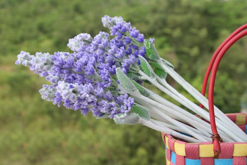 Lavendel im Korb lizenzfreie stockbilder