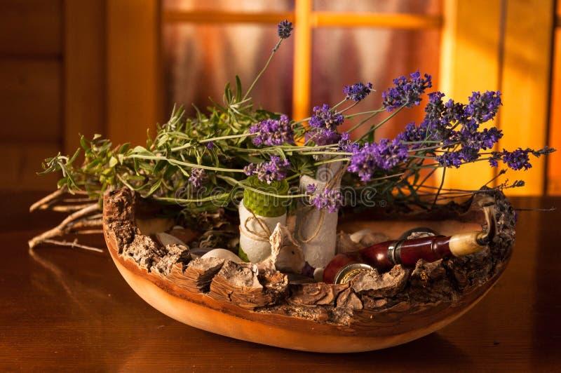 Lavendel, lavandula stock foto