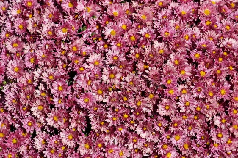 Lavendel-Mamas stockfotos