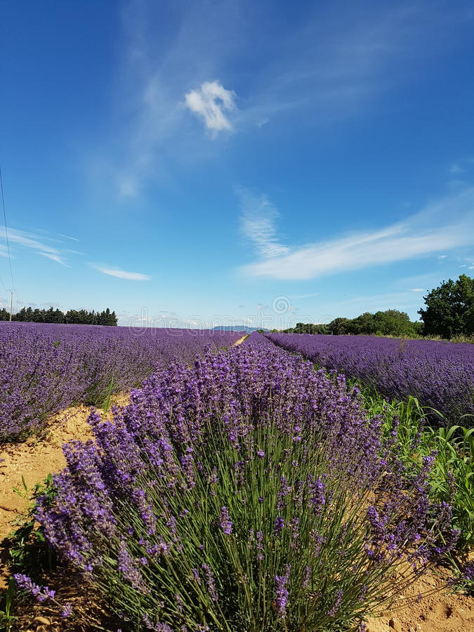 Lavendel met en place des Frances photo stock