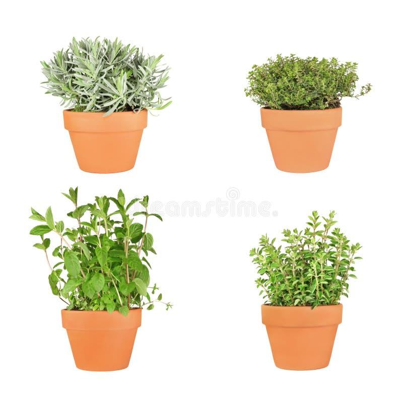Lavendel-, Minze-, Oregano-und Thymian-Kräuter lizenzfreies stockbild