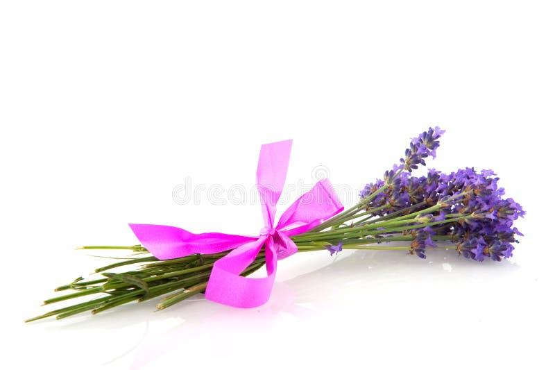 Lavendel mit rosafarbenem Bogen stockbilder