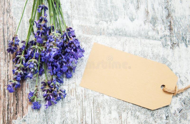 Lavendel mit Tag lizenzfreie stockbilder
