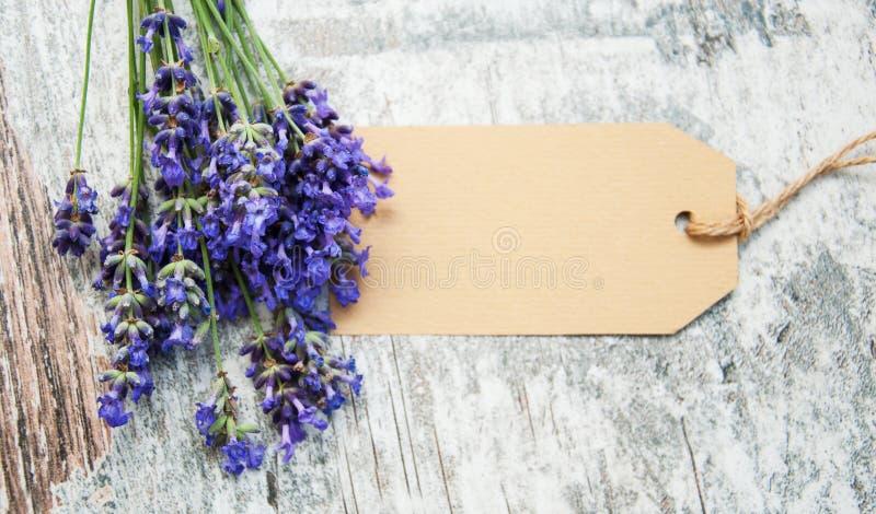 Lavendel mit Tag stockfotos