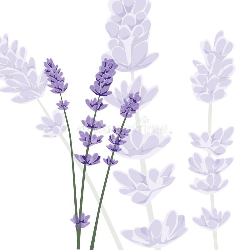 Lavendel op geïsoleerde achtergrond,  stock illustratie