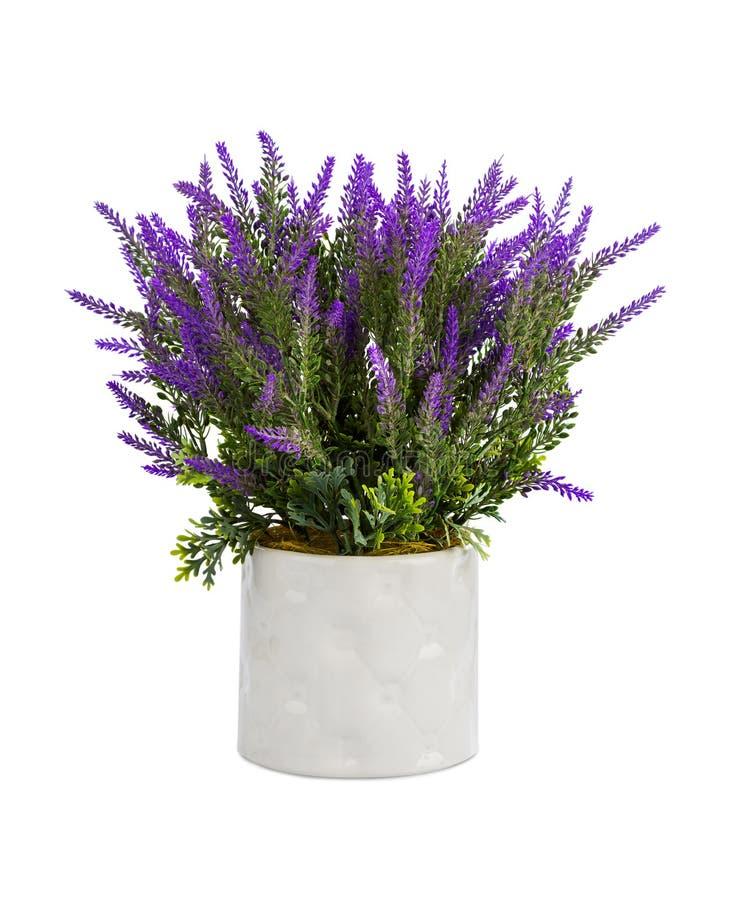 Lavendel in vaas stock afbeeldingen