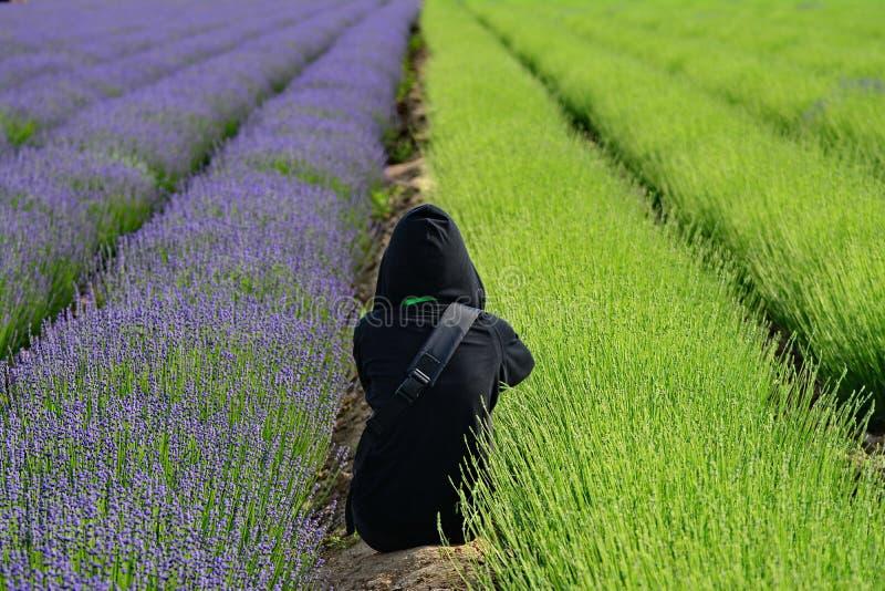 Lavendel in Xinjiang stockbild