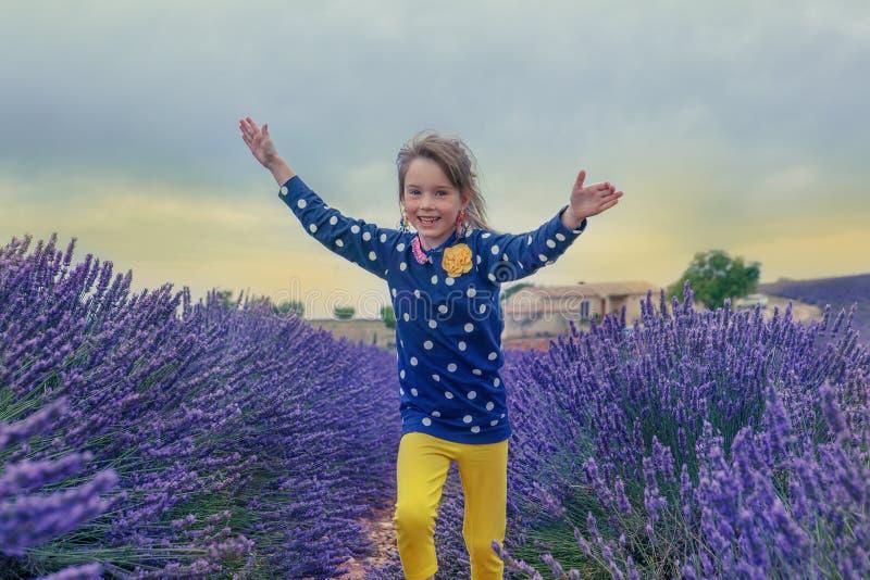 Lavendelackerland stockbilder
