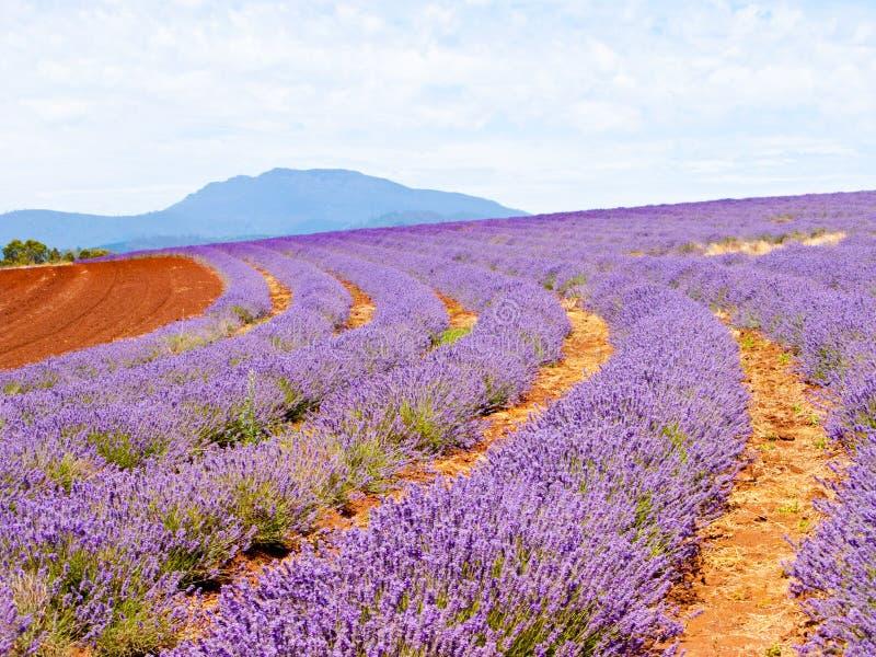 Lavendelbauernhof lizenzfreie stockbilder