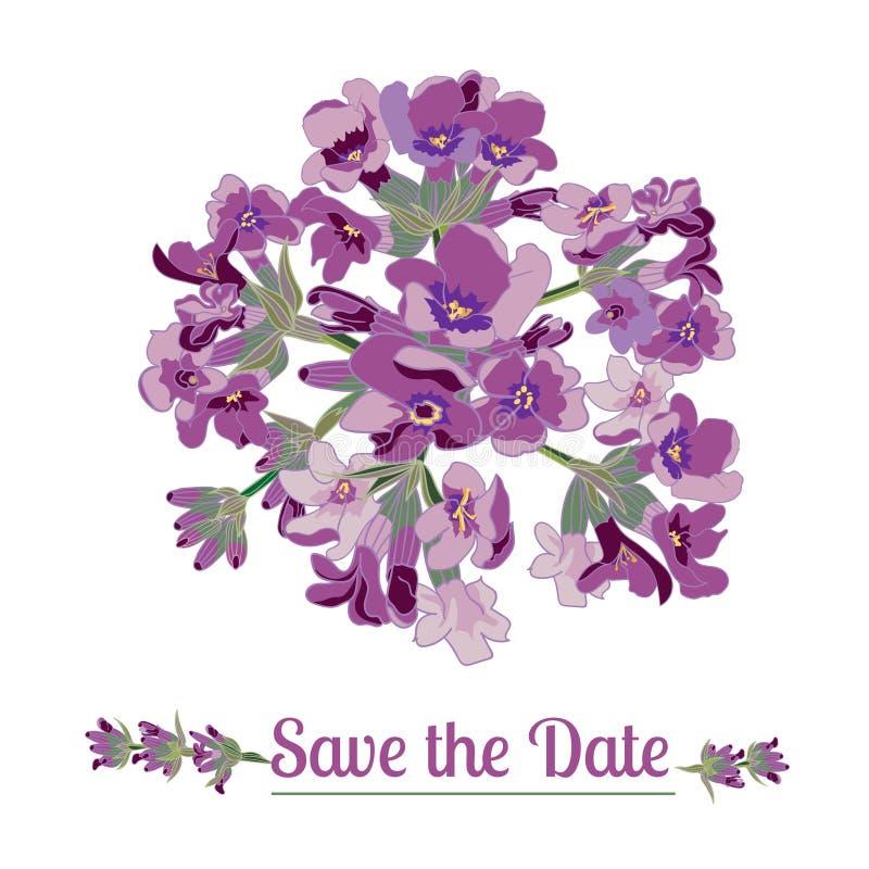 Lavendelbloem op witte achtergrond Kleurrijke uitstekende illustratie stock illustratie