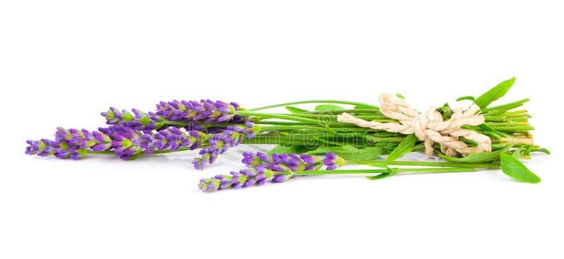 Lavendelbloemen royalty-vrije stock fotografie