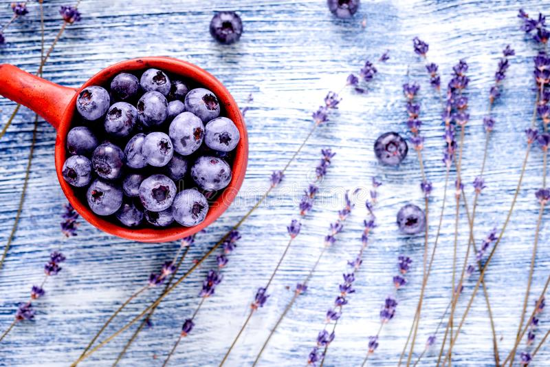 Lavendelbloemen met de spot van de bosbessenkop omhoog op blauwe achtergrond t royalty-vrije stock fotografie