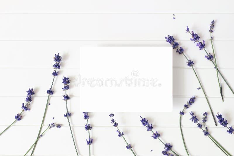 Lavendelbloemen op witte houten lijstachtergrond Decoratief bloemenkader, Webbanner met Lavandula-officinalis spatie stock foto