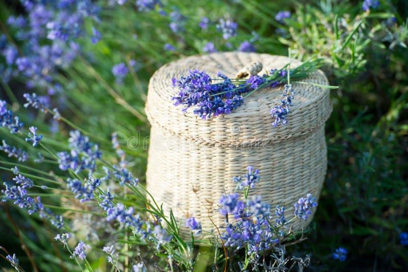 Lavendelbloemen - Zonsondergang over een gebied van de de zomer purper lavendel royalty-vrije stock foto