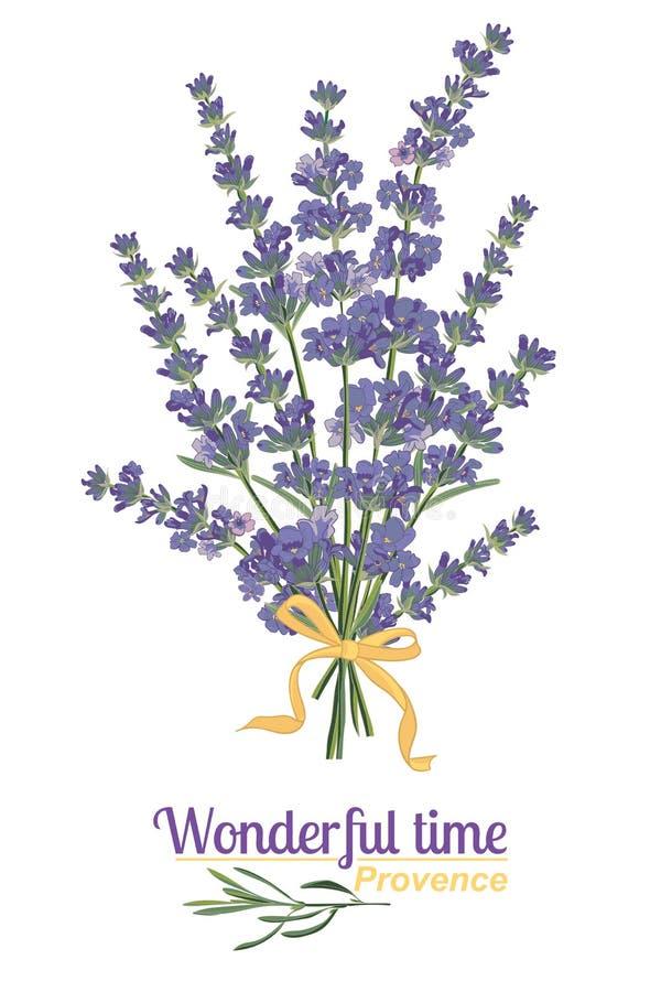 Lavendelblomma på vit bakgrund Färgrik tappningillustration stock illustrationer