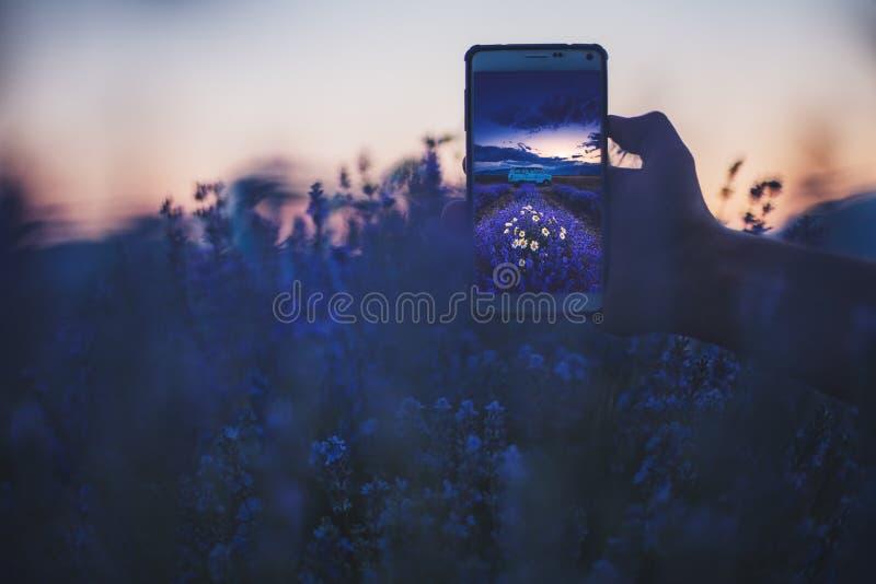 Lavendelblomma som blommar det vädrade fältet, ensamt träd i ändlöst r royaltyfri bild