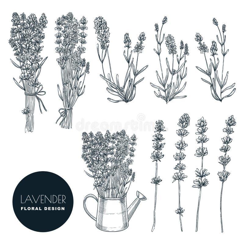 Lavendelblommauppsättningen, vektor skissar illustrationen Utdragen bukett för hand, beståndsdelar för blom- design som isoleras  stock illustrationer