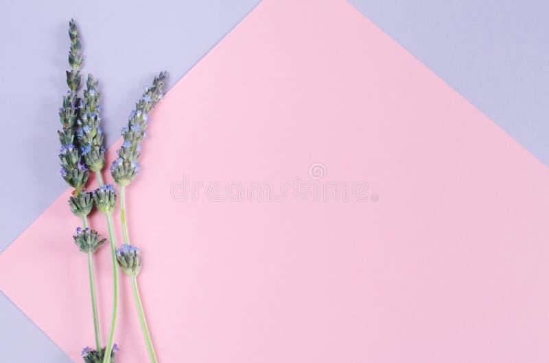 Lavendelblumen über Aquarell und weißem Hintergrund lizenzfreie stockbilder