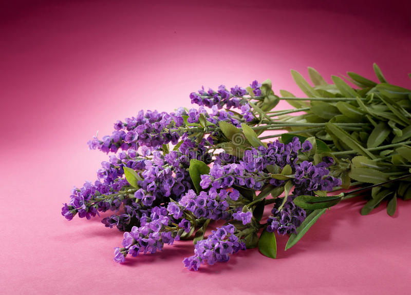 Lavendelblumen stockbild
