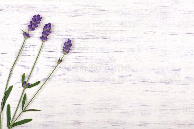 Lavendelblumen auf weißem hölzernem Tabellenhintergrund stockfotografie