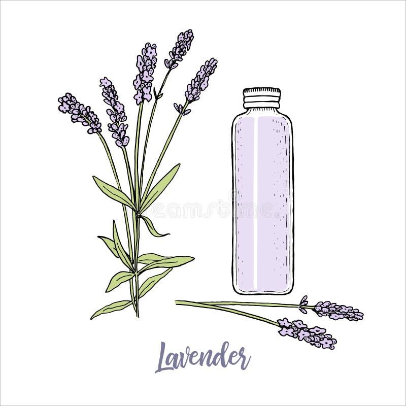 Lavendelblumen färbten Skizzenart und hohe Flasche des cosmetcs Make-upabbaus steem, Kopf in der Blüte purpurrot stock abbildung