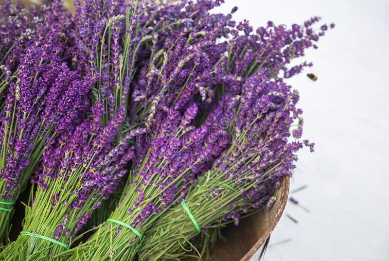 Lavendelboeketten in mand en bij Lavendelwijnoogst met de verse, mooie purpere bloesems van lavendelbloemen stock afbeelding
