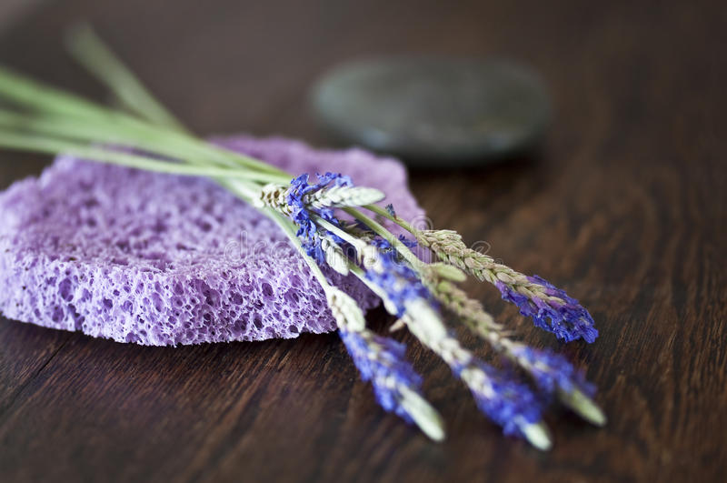 Lavendelbrunnsortbegrepp royaltyfri fotografi