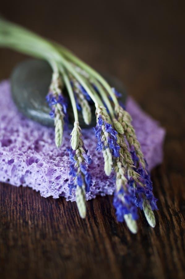 Lavendelbrunnsortbegrepp arkivfoton