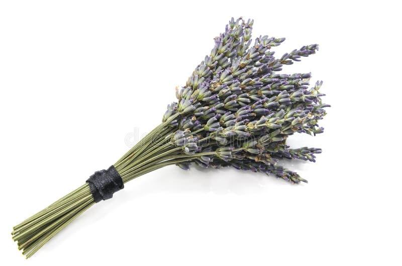 Lavendelbukett royaltyfri fotografi