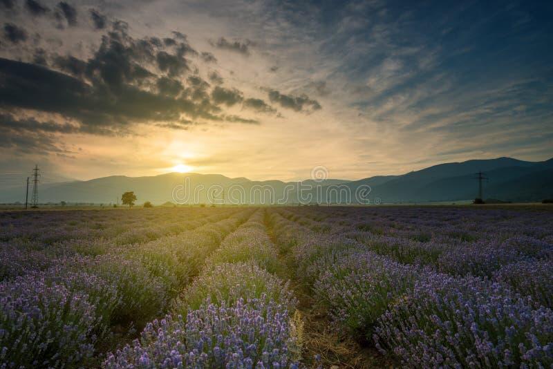 Lavendelfält Härligt avbilda av lavendel sätter in royaltyfri fotografi
