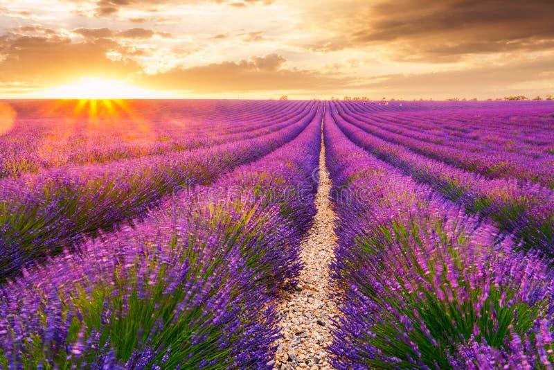 Lavendelfält i Valensole, Frankrike arkivbilder