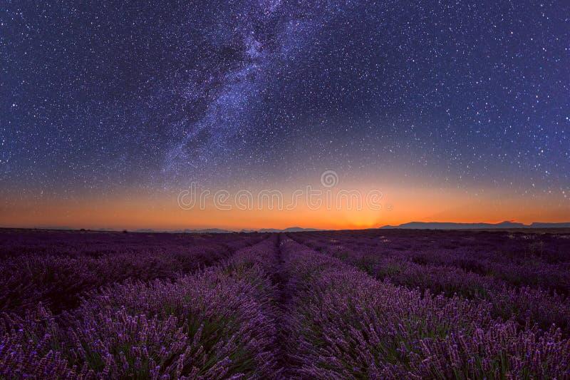 Lavendelfält på natten i Provence som förbluffar landskap, Frankrike arkivfoton