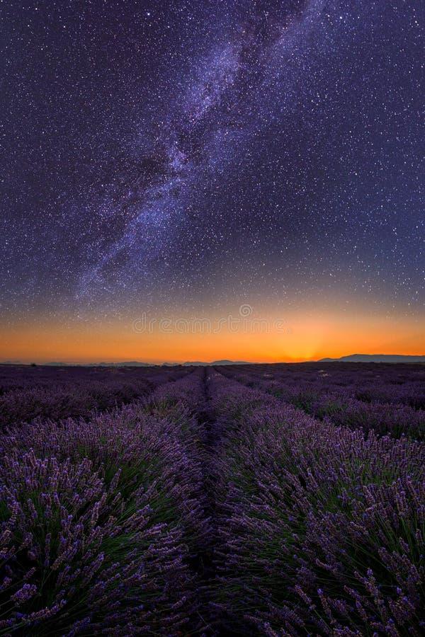 Lavendelfält på natten i Provence som förbluffar landskap, Frankrike royaltyfri foto
