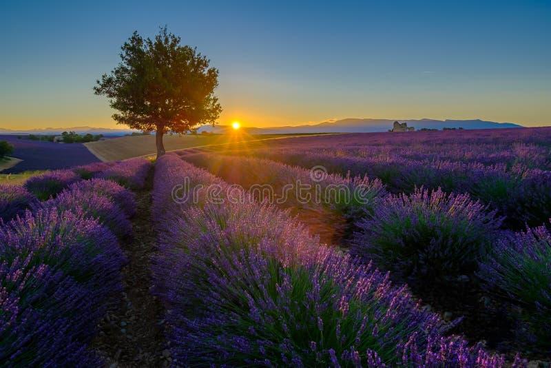 Lavendelfält på soluppgång i Provence arkivbild
