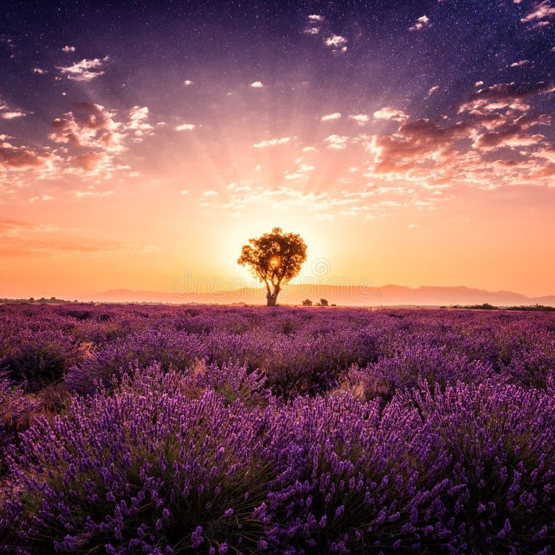 Lavendelfält som förbluffar landskap, soluppgångglöd, naturlig sommarloppbakgrund, Provence, Frankrike royaltyfri foto