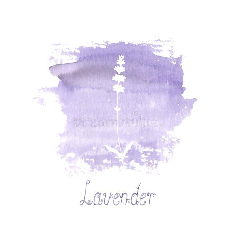 Lavendelf?ltmodell p? purpurf?rgad fl?ck som isoleras p? vit bakgrund Utdragna blommor f?r akvarellhand stock illustrationer
