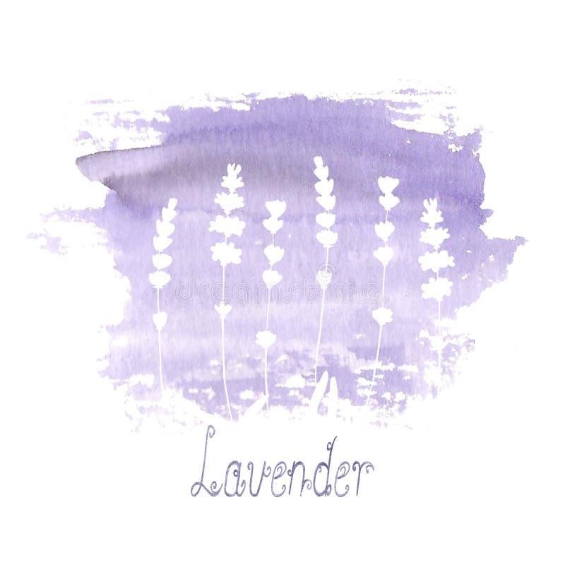 Lavendelf?ltmodell p? purpurf?rgad fl?ck som isoleras p? vit bakgrund Utdragna blommor f?r akvarellhand vektor illustrationer
