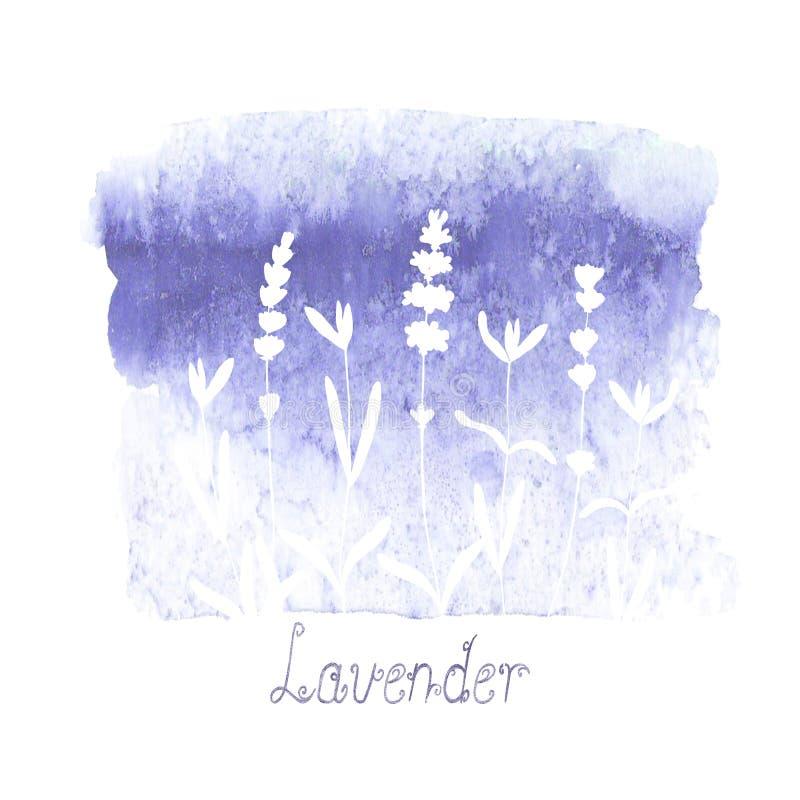 Lavendelf?ltmodell p? purpurf?rgad fl?ck som isoleras p? vit bakgrund Utdragna blommor f?r akvarellhand royaltyfri illustrationer
