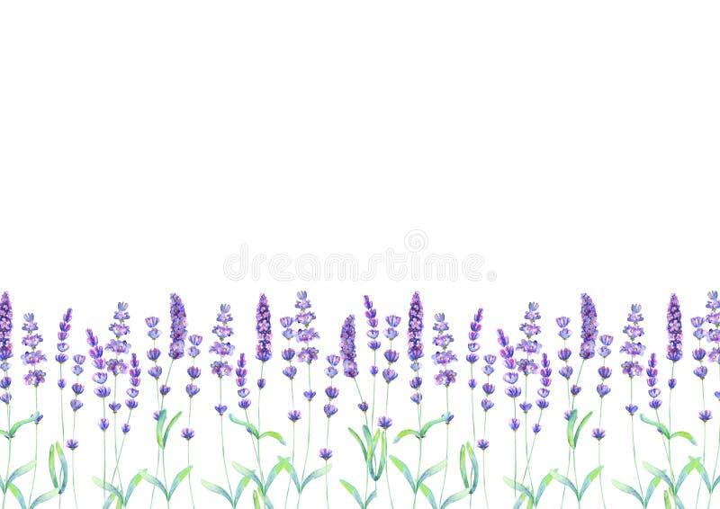 Lavendelf?ltmodell p? vit bakgrund Utdragna blommor f?r akvarellhand, sidor, v?xter fotografering för bildbyråer
