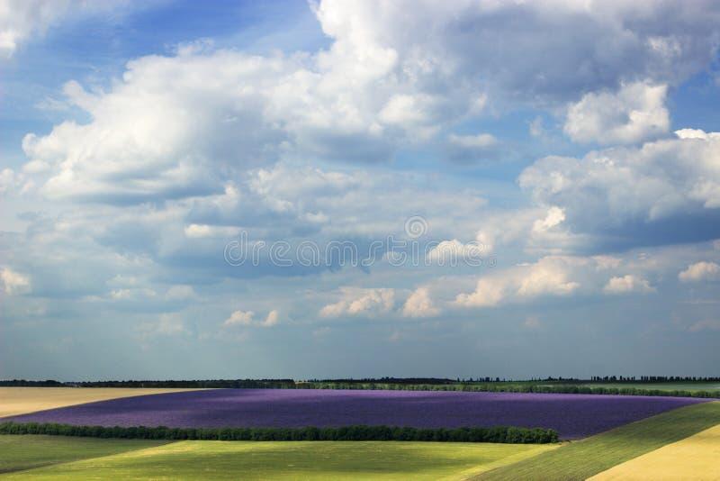 Lavendelfeld an einem sonnigen Tag stockbilder