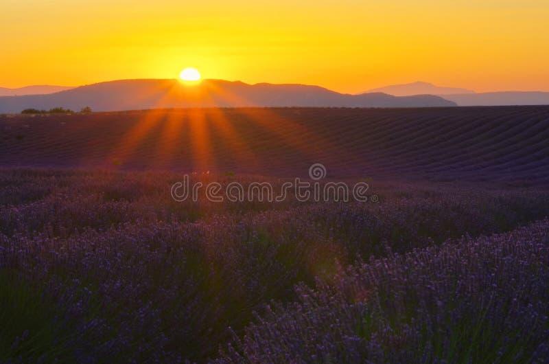 Lavendelfeldsonnenuntergang stockfotos