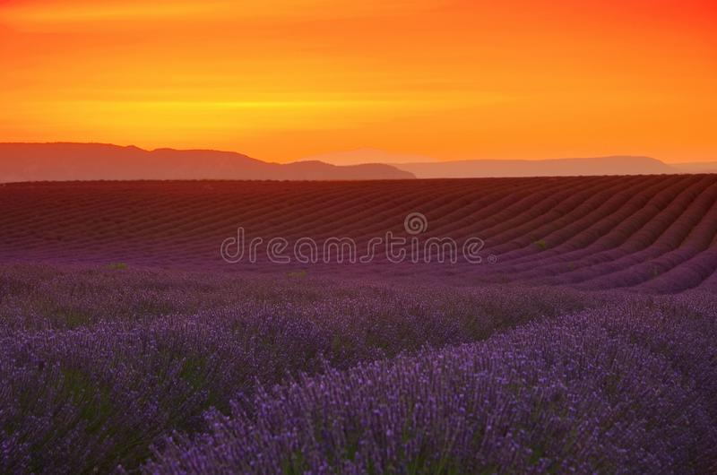 Lavendelfeldsonnenuntergang lizenzfreies stockfoto